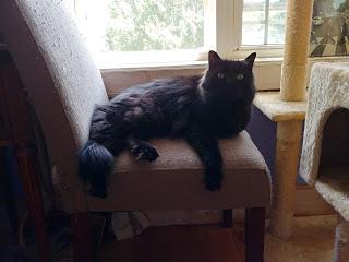 Duke Window chair