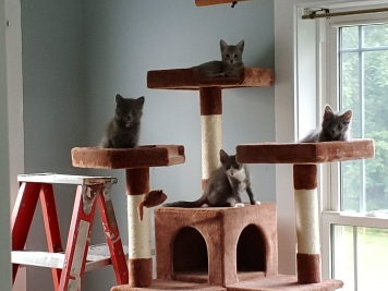 Gang of 4 - cat tower 2