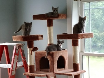 Gang of 4 - cat tower