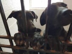 puppy twins 2