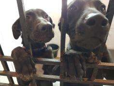 puppy twins 3