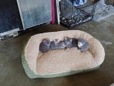 Wynne & the 5 #3 Wynne meow