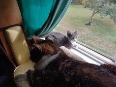 Wynne window w Bella #3