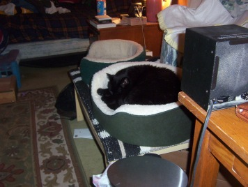 Benny old house 1 - cat bed