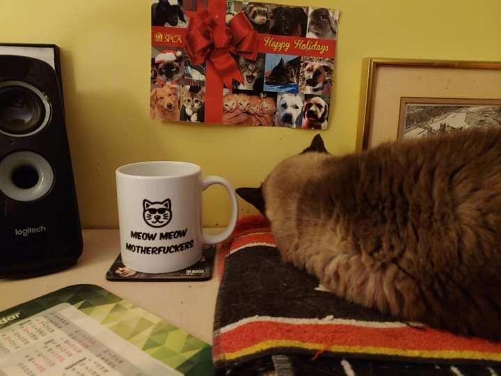 Meow Meow motherfuckers - Mimi