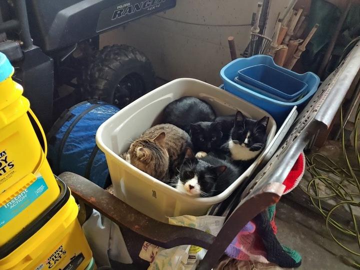 Bin O Cats - Dutch and the gang