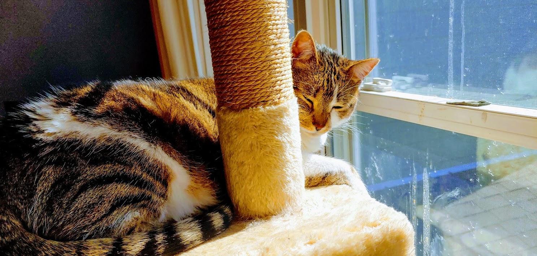 Bella in her window fancy