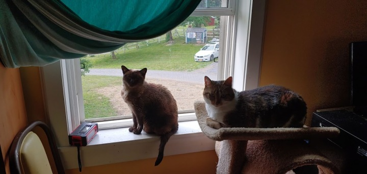 Mimi and Bella look after new doo