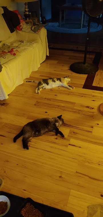Mimi & Cricket synchronized laying