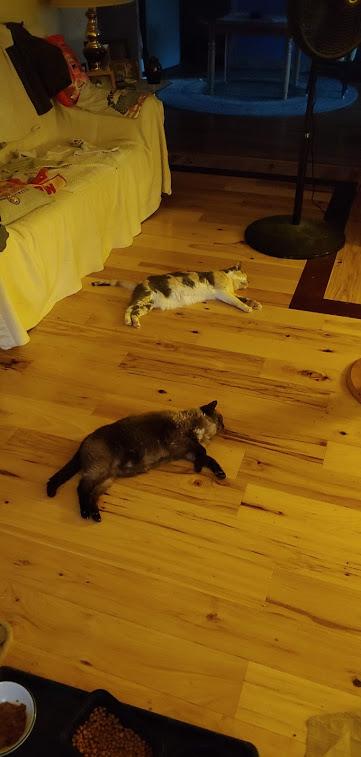 Mimi & Cricket synchronized laying